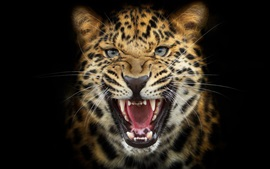 Preview wallpaper Leopard snarl close-up