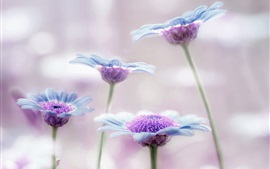 Preview wallpaper Little flowers, blue, purple