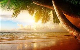 Preview wallpaper Summer tropical scenery, sunset, sea, ocean, palm trees, sunset