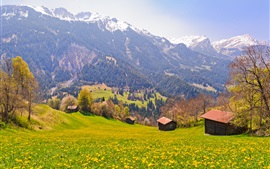 Preview wallpaper Switzerland, fields, trees, mountains, slopes, village