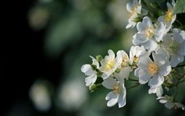 Белые цветы цветение, весна, блики