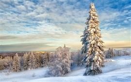 Blancos del invierno, nieve, árboles