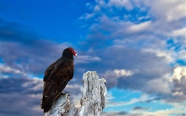 Um pássaro, céu azul