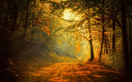 Preview wallpaper Autumn, forest, road, trees, sunlight