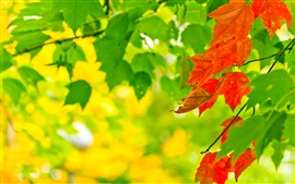 Autumn, leaves, green, red, sunlight, bokeh