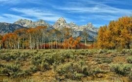 Outono, montanhas, árvores