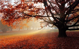 Preview wallpaper Autumn, park, lonely tree, red leaves, sun