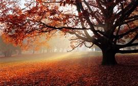 Осень, парк, одинокое дерево, красные листья, солнце