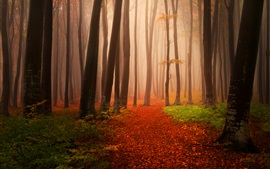 Autumn, trees, fog, forest, trail