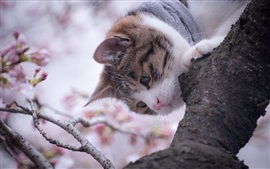 Preview wallpaper Cat in the tree, spring, flowers