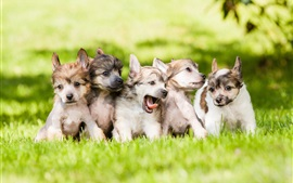 Preview wallpaper Cute dogs, puppies, grass, lawn