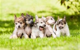 Симпатичные собаки, щенки, трава, газон