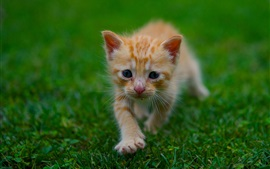 Preview wallpaper Cute kitten, grass, green, summer