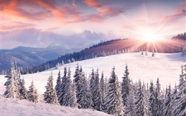 Preview wallpaper Dawn, winter, snow, sun, mountains, trees