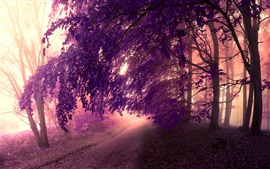 Forest, mist, road, trees, leaves, purple style