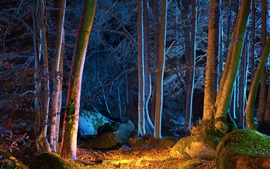 Preview wallpaper Forest, trees, autumn, night, lights