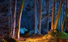 Лес, деревья, осень, ночь, огни