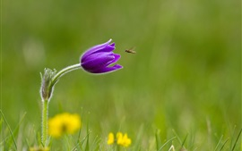Grass, purple flower, insect