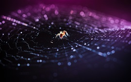 Preview wallpaper Insect, spider, web, bokeh, macro