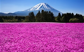 Preview wallpaper Japan, Fuji volcano, mountain, trees, flowers