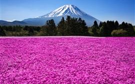 Япония, Fuji вулкан, горы, деревья, цветы