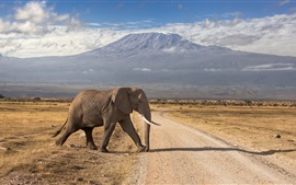 Preview wallpaper Kenya, mountains, volcanoes, road, elephant