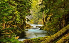 McKenzie River, Oregon, forest, trees, moss