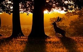 Manhã, natureza, floresta, árvores, veados