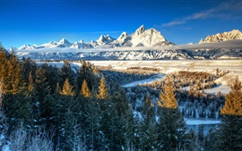 Aperçu fond d'écran Nature, montagnes, arbres, hiver