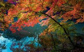 Rio, reflexão da água, árvores, folhas de cor vermelha