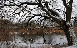 Tree, river, snow, winter, dry