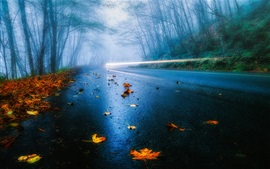 Preview wallpaper USA road, autumn, rain, fog, foliage, forest, trees, light