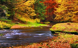 Preview wallpaper Autumn, forest, trees, leaves, river