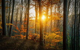 Autumn, forest, trees, leaves, yellow, sunlight
