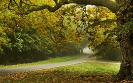 Preview wallpaper Autumn, trees, park, road, leaves