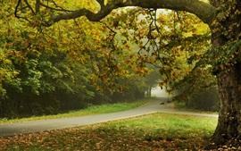 Otoño, árboles, parque, carretera, hojas