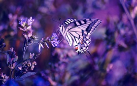 Preview wallpaper Butterfly, flowers, insect, plant, purple background