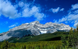 Preview wallpaper Cascade Mountain, Banff National Park, Alberta, Canada, forest