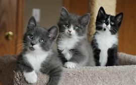 Gatinhos bonitos, olhos, rosto, branco preto