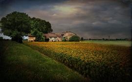 Crépuscule, ciel nuageux, le tournesol, la maison