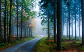 Preview wallpaper Forest, pine, spruce, road, fog, trees, autumn, nature