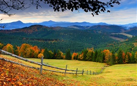 Preview wallpaper Forest, trees, mountains, grass, leaves, fence, autumn