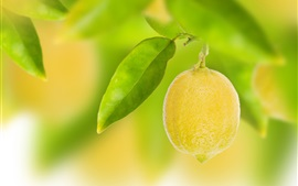 Fruit, yellow lemon, leaves, bokeh