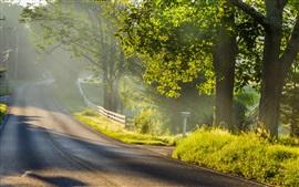 Утро пейзаж, дорога, туман, солнечный свет, деревья