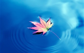 One piece maple leaf, blue lake water