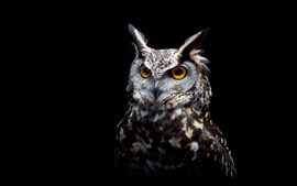 Preview wallpaper Owl, black background