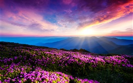 Preview wallpaper Purple flowers, sky, clouds, sunset, rays, mountains