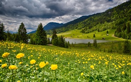 Sky, clouds, flowers, grass, mountains, lake