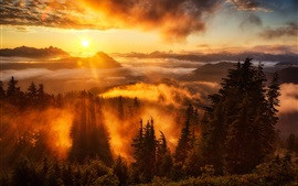 Sky, sunrise, rays, mountains, clouds, trees, fog