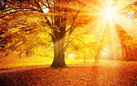 Preview wallpaper Sunset autumn, forest, yellow leaves, trees, sun